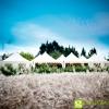 fotografo-matrimonio-pesaro-urbino-marche_0063